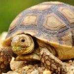 Tortugas: Toda la información