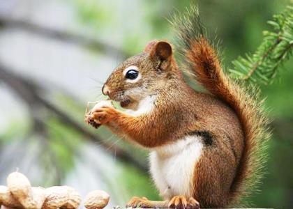 ¿De qué se alimentan las ardillas?
