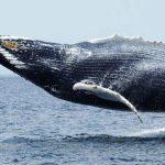 ¿Qué comen las ballenas?