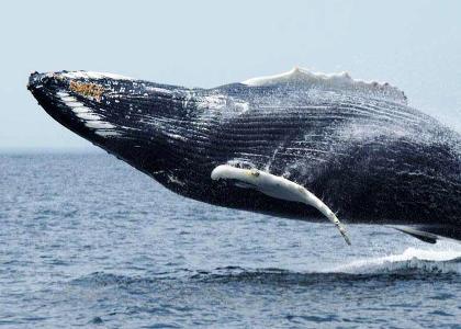¿De qué se alimentan las ballenas?