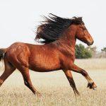 ¿Qué comen los caballos?