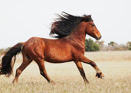 ¿De qué se alimentan los caballos?