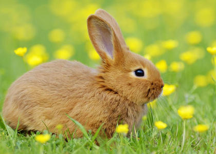 de qué se alimentan los conejos