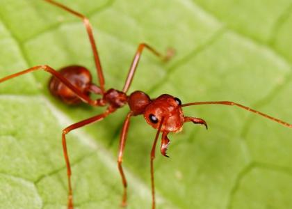 ¿De qué se alimentan las hormigas?