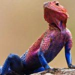 ¿Qué comen las lagartijas o lagartos y dónde viven?