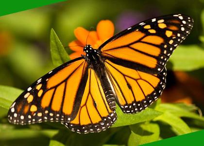 ¿De qué se alimentan las mariposas?