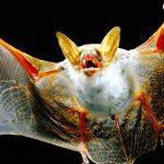 ¿Qué comen los murciélagos?