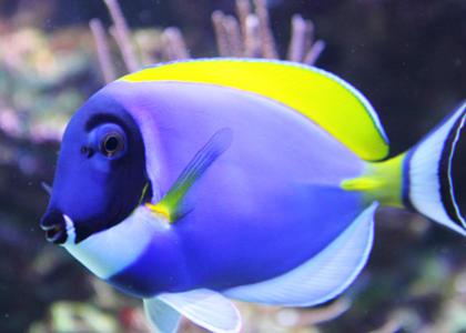 de qué se alimentan los peces
