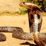 ¿Qué comen las serpientes?