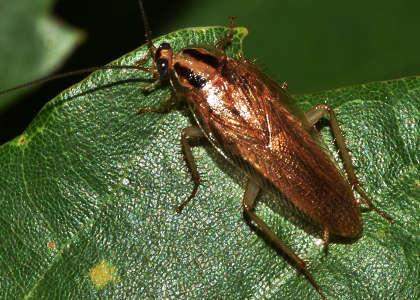 Qu comen las hormigas la mejor explicaci n for Como eliminar cucarachas del desague