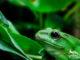 qué comen los anfibios