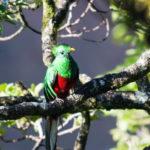 ¿Qué come el quetzal?